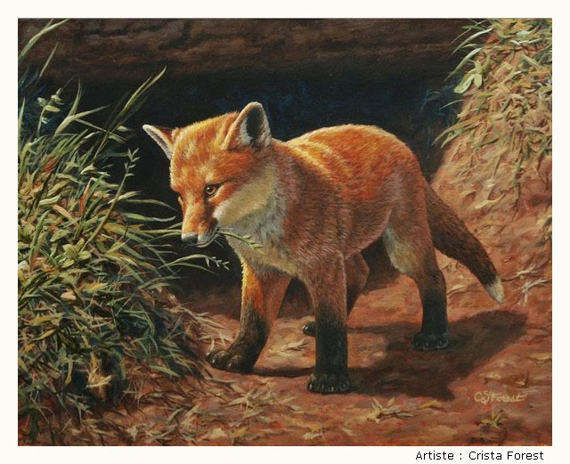 FOREST Crista HtIIKb-Forest-209