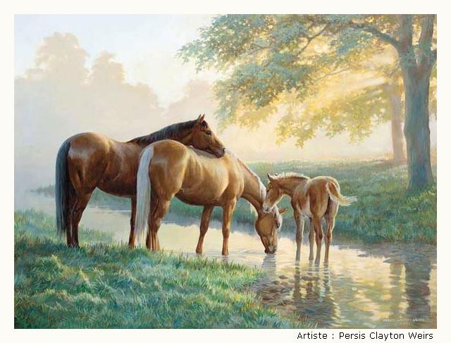 WEIRS Persis Clayton 1HOJKb-Weirs-305