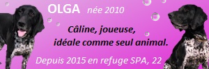 OLGA - braque français blue belton 13 ans (6 ans de refge)  - Refuge du Penthievre à Brehand (22) 20121103452124395717166355