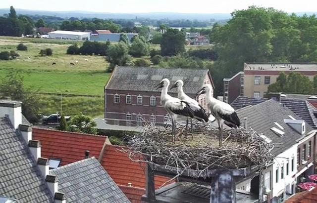 Pays-Bas : Cigogne TodvLb-A-103-16-C