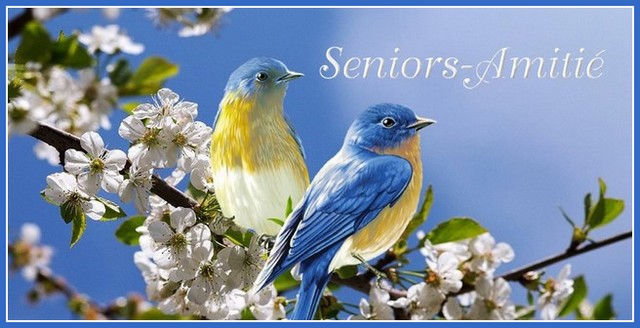 Voir : Seniors-Amitié ZvIvLb-Seniors-101