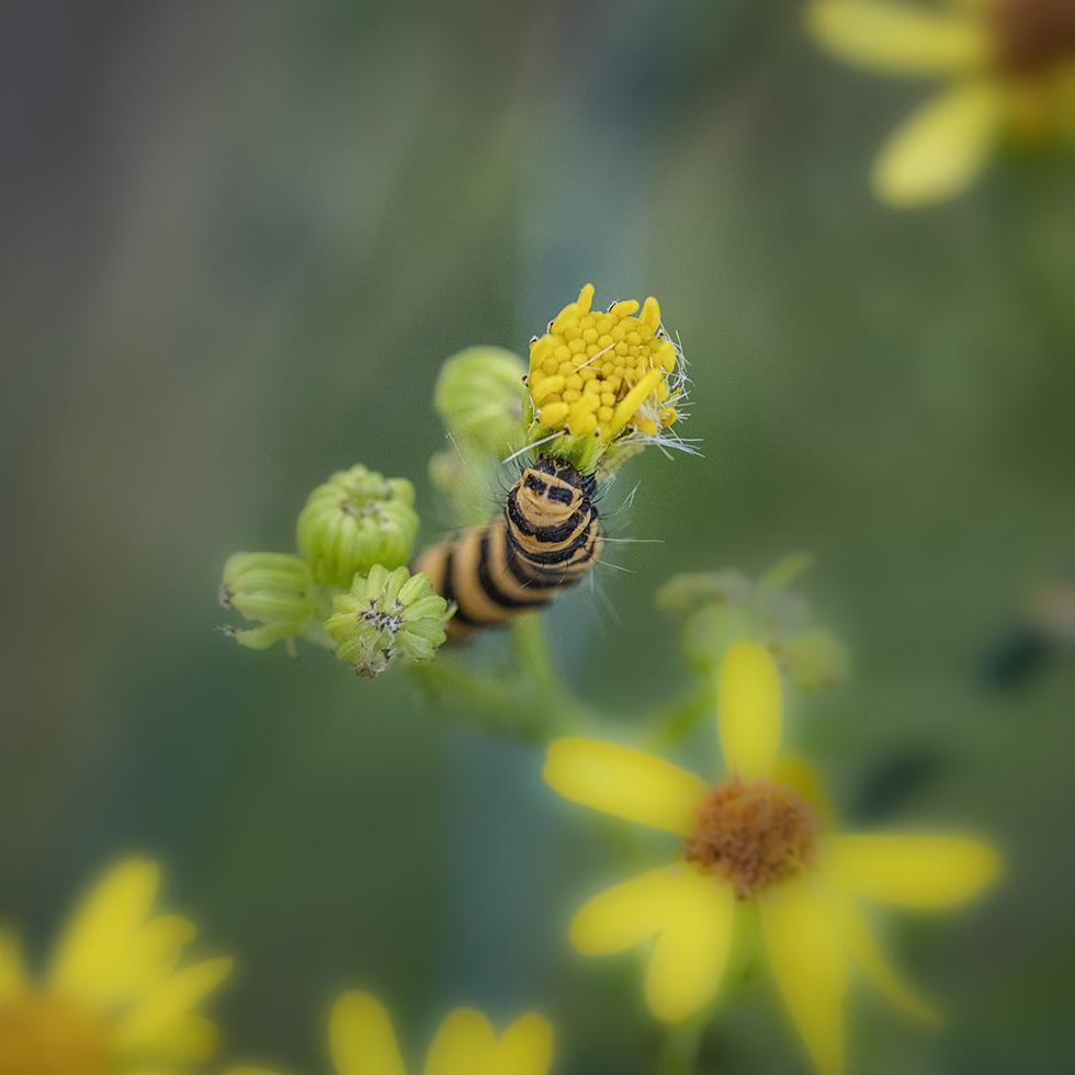 Macros/  proxi/  insectes  - Page 29 21070302161923563017481392