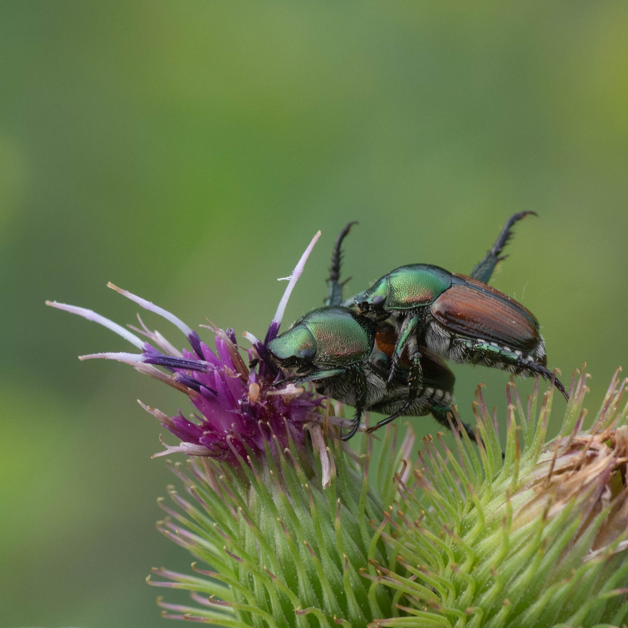 Macros/  proxi/  insectes  - Page 31 21072503404325981217504957