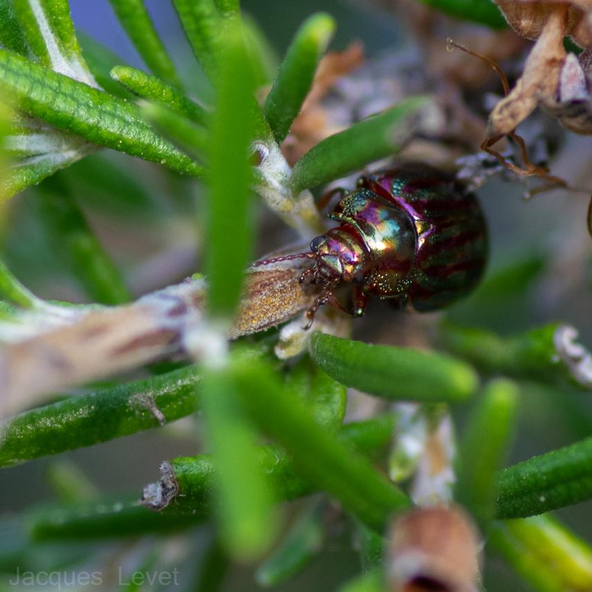 Macros/  proxi/  insectes  - Page 39 KJzzMb--IMG4409-1