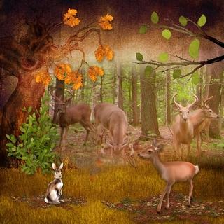 AUTUMN FOREST vol.1 - lundi 13 septembre / monday september 13th 21091309490319599817566075